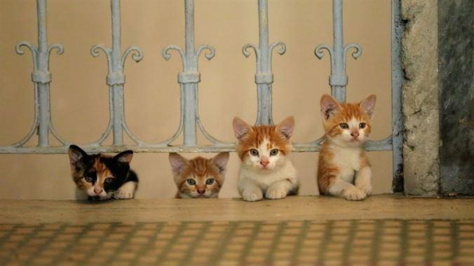 Kedi - Von Katzen und Menschen (c) Weltkino Filmverleih